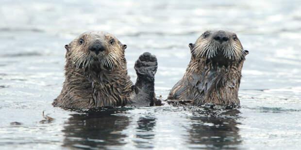 Мы пришли к вам с миром! Подборка забавных фото о животных