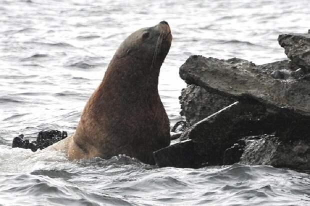 В Минприроды связали гибель тюленей в Каспийском море с деятельностью браконьеров