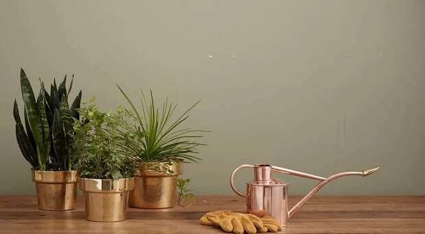 7 причин, почему у вас в доме не приживаются растения