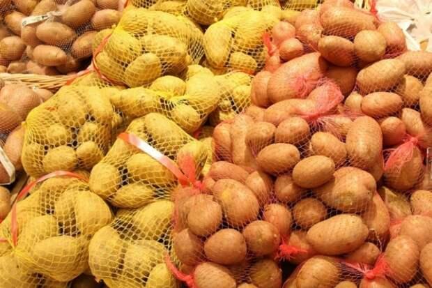 Белорусский картофель приморцы попробуют через три года