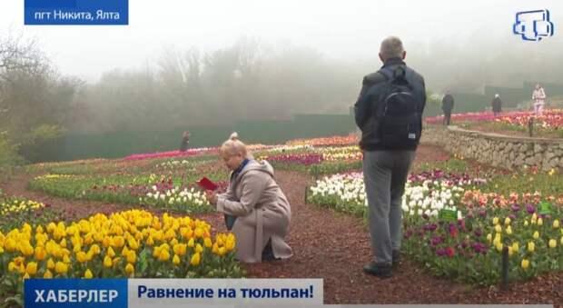 Парад тюльпанов начался в Крыму