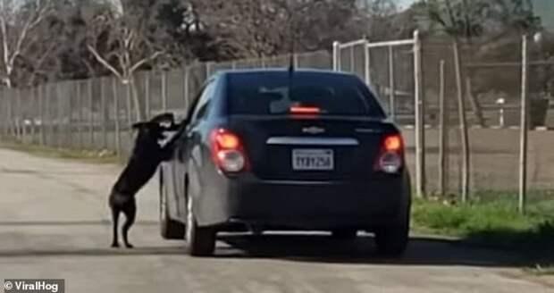 Хозяин оставил его посреди дороги. Он бежал за машиной, моля о ″прощении″