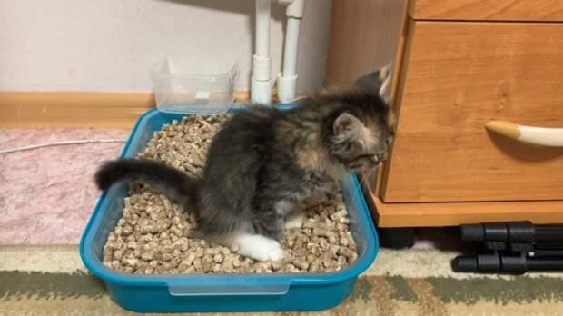Как выбрать наполнитель для кошек? Плюсы и минусы каждого вида