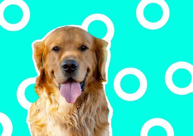 Собак есть нельзя: Китай запретил употреблять в пищу этих домашних животных