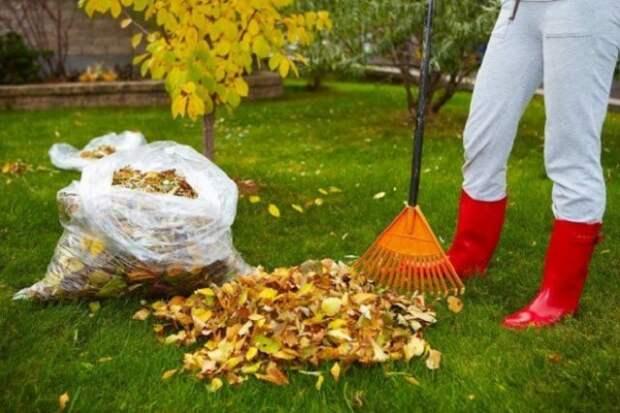 Сколько из чего как готовится компост перегной травяной настой опилки