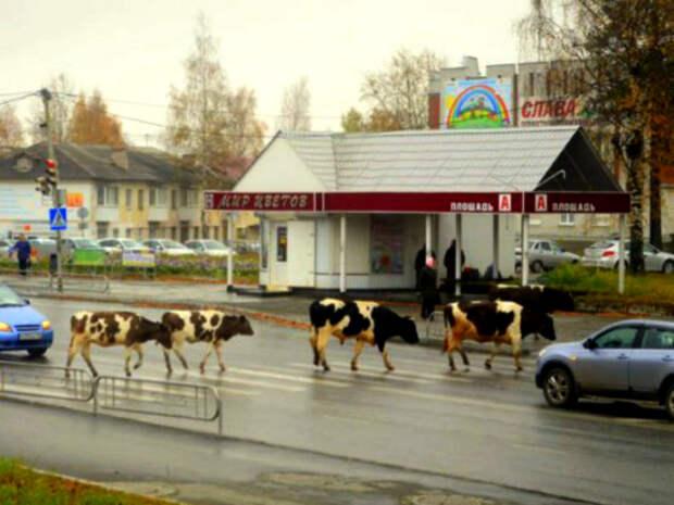 Весело, самобытно, загадочно, по-русски: 22 фото сродных просторов