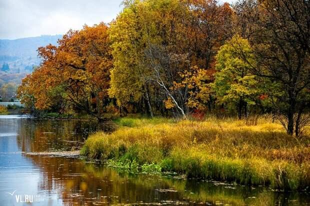 Бархатный сезон пришел в пригород Владивостока владивосток, осень, фоторепортаж