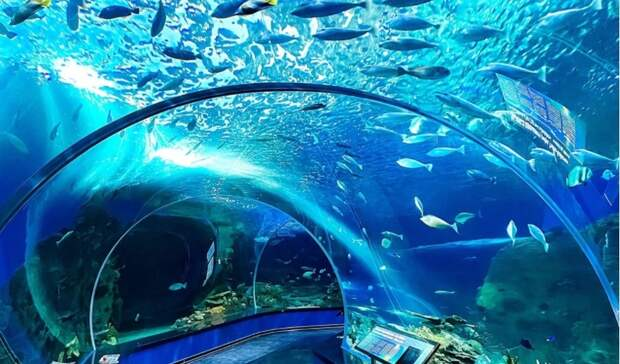 ВПриморском океанариуме креветок отправили чистить зубы муренам