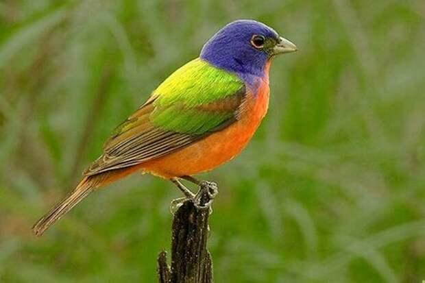 Поющие шедевры: 7 самых красивых птиц в мире