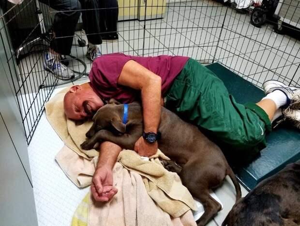Работа мечты: тут платят за то, чтобы целыми днями обнимать несчастных щенков