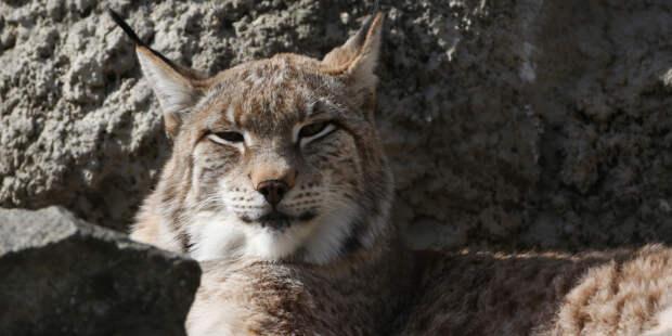 Ученые доказали способность животных смеяться как люди