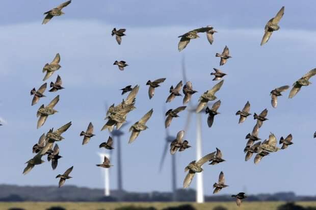 Ветропарки: защита климата в ущерб живой природе?