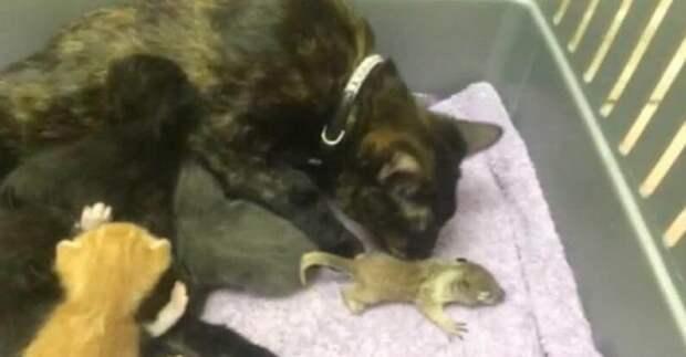 Мама-кошка вырастила бельчонка вместе со своими котятами