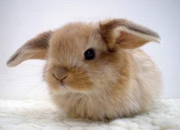 Содержание декоративных кроликов в домашних условиях