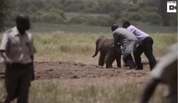 В Африке исследователи спасли новорожденного слоненка