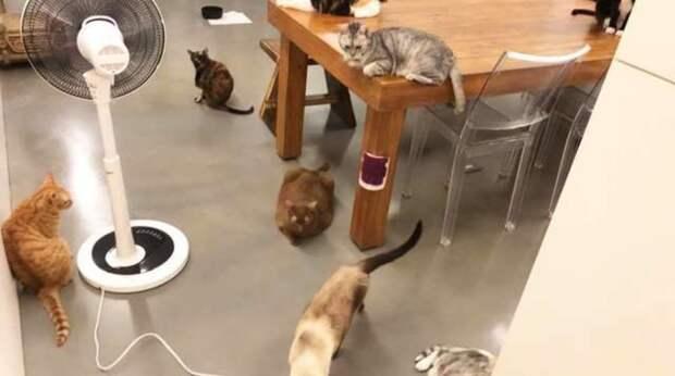 Хозяину удалось снять видео того, как повели себя его кошки во время землетрясения