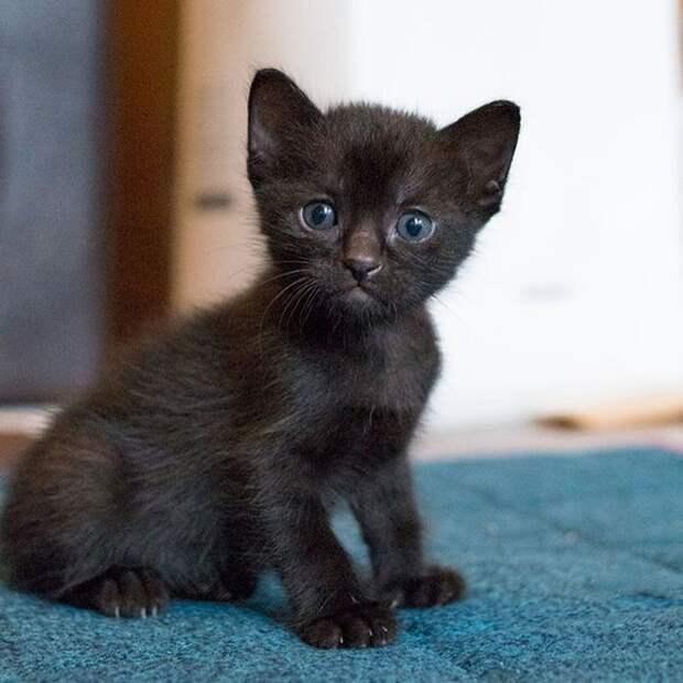 Черные кошки: развеиваем мифы и смотрим фото