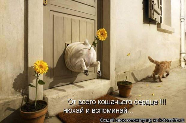 kotomatritsa_qr (692x458, 190Kb)