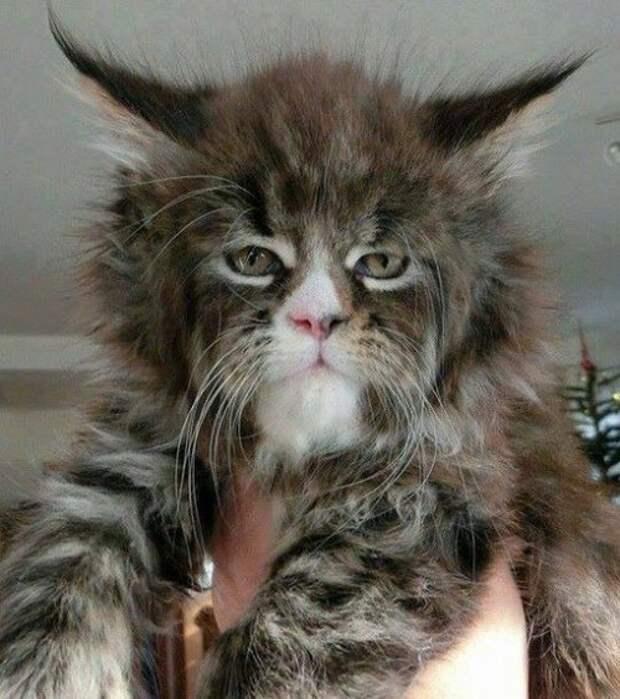 Топ-10: Самые странные и пугающие кошки из всех, которых вы когда-либо видели