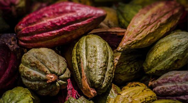 5 причин полюбить какао