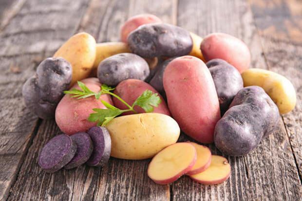 Выбираем устойчивые к фитофторозу сорта картофеля