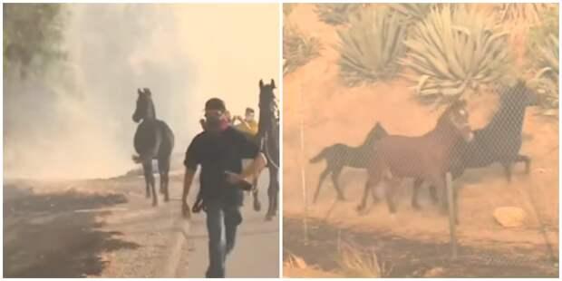 Лошадь кинулась в огонь, чтобы спасти жеребёнка и его мать (4 фото + 1 видео)
