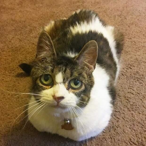 Координатор приюта вошла в комнату и заметила кошку. Грустные глаза мурлыки не могли оставить женщину равнодушной