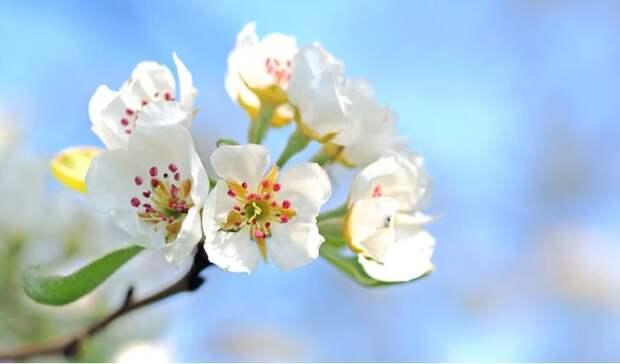 В парке «Ангарские пруды» обследовали яблони