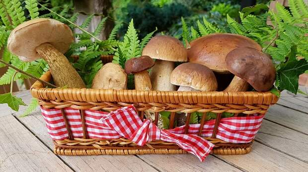 Кто получит выгоду от ужесточения правил сбора грибов, объяснил эксперт