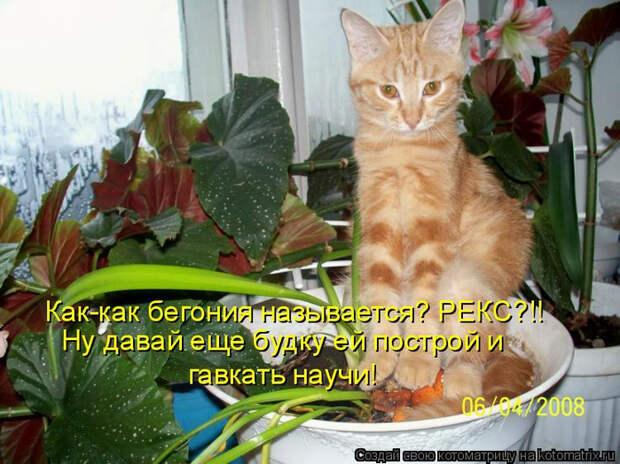 kotomatritsa_h (700x524, 419Kb)