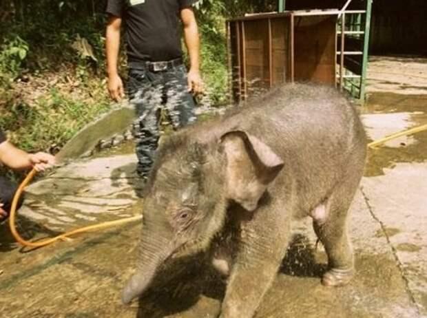 Купи слона: детеныша африканского животного продает житель Новосибирска