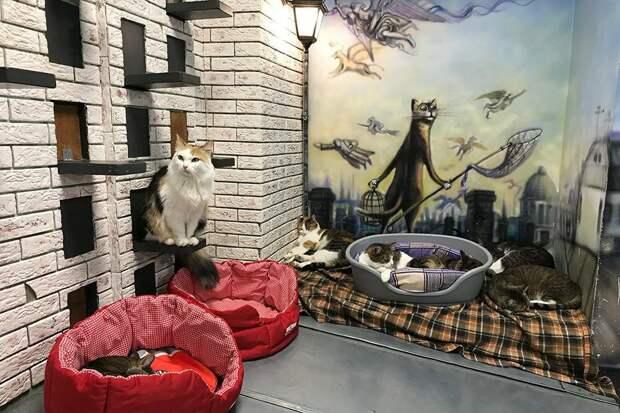 Стены «Республики кошек» украшают сюжеты картин петербургского художника Владимира Румянцева