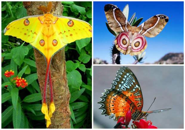 Единственный материк на планете, где не были обнаружены бабочки - Антарктида бабочки, интересное, красота, насекомые