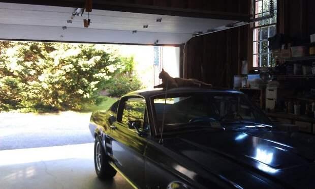 Кот может настигнуть вас и в гараже встреча, гости, дружба, животные, коты, кошки, неожиданно, фото