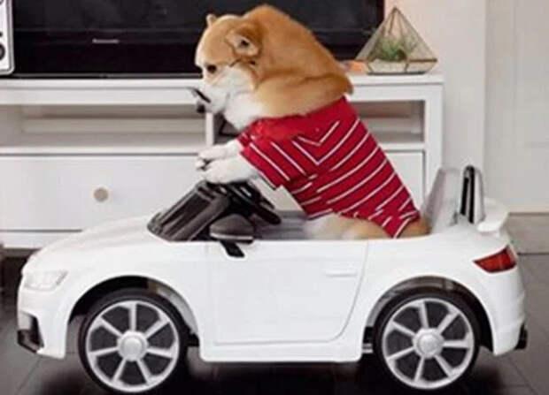 Самые богатые собаки из социальных сетей