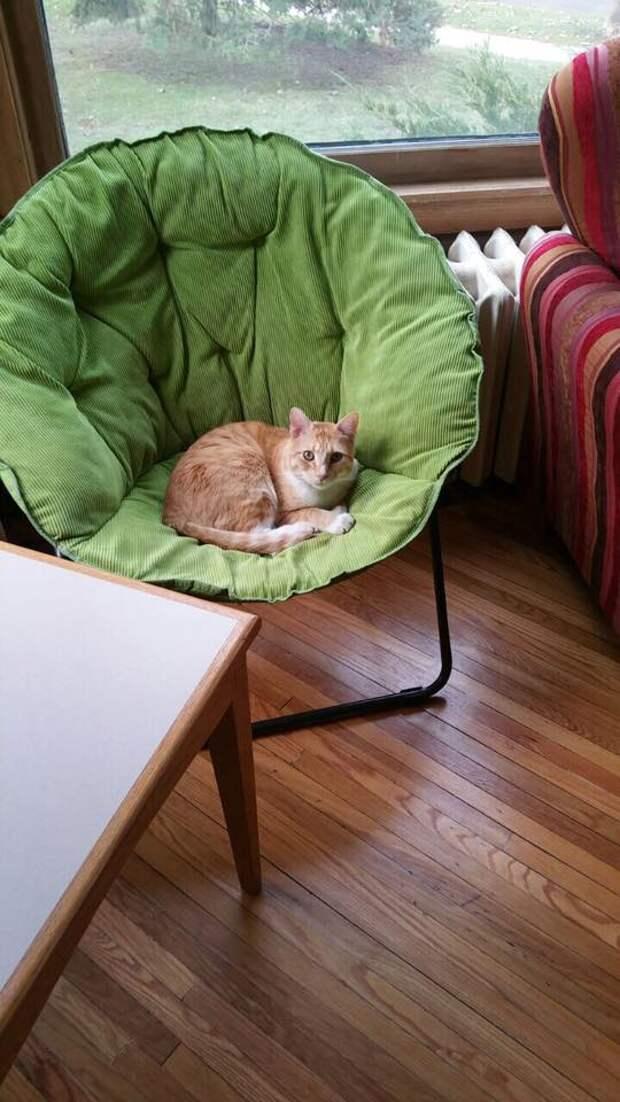 Двойная жизнь кота Макса… Этот проказник успел наделать шуму на всю страну