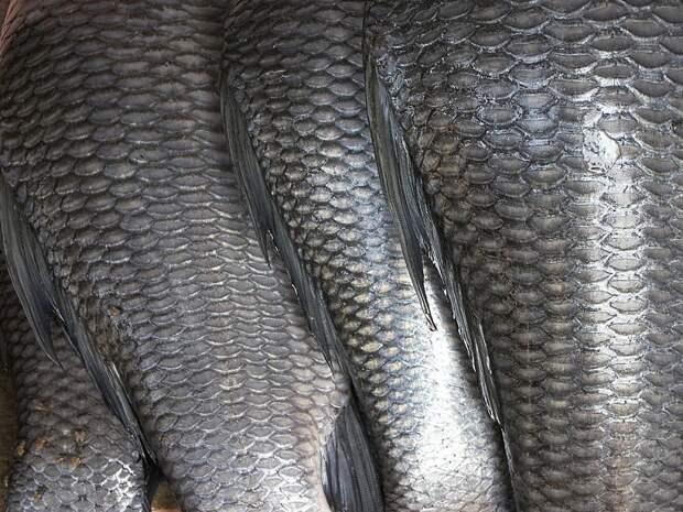 Вот зачем в помаду добавляют рыбью чешую