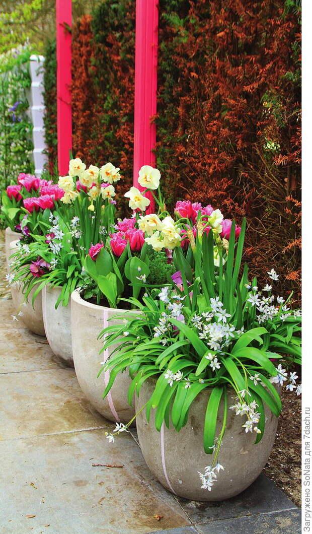 Букеты в контейнерах смогут вырастить даже начинающие садоводы.