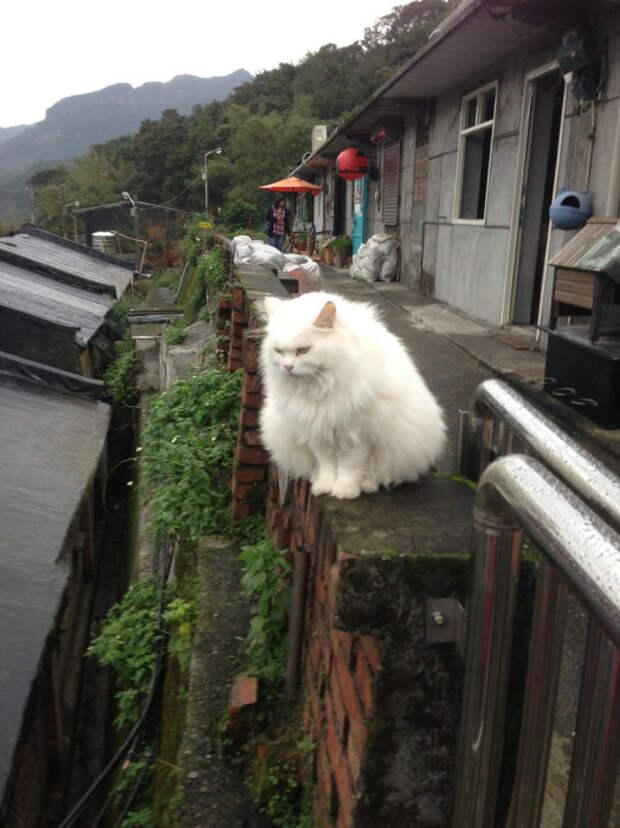 Кошка, осматривающая Хутонг. | Фото: flickr.com.