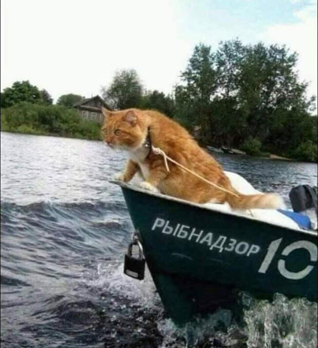Кот инспектор