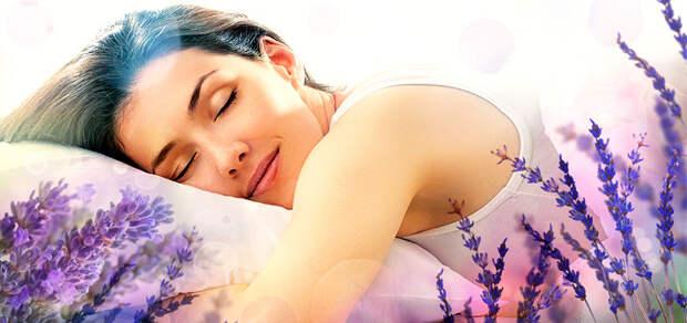 7 комнатных растений для лучшего сна