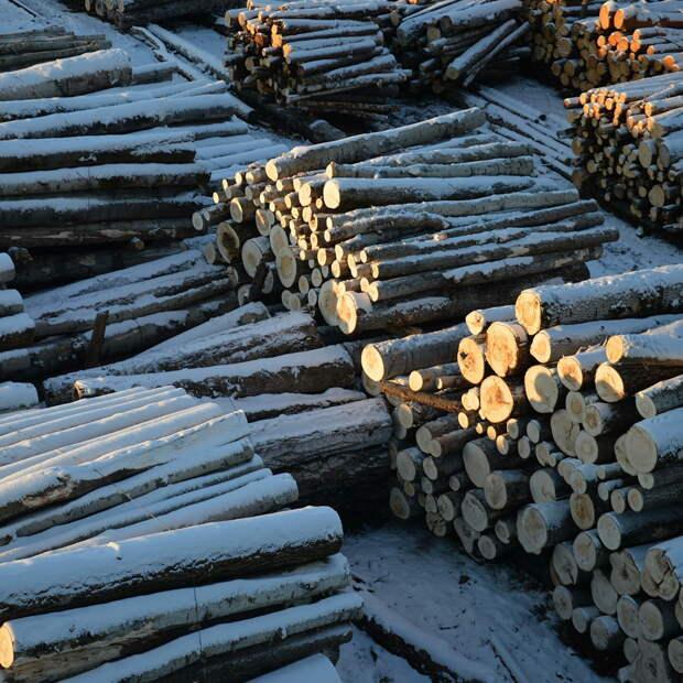 Расширился список обвиняемых в деле о незаконной вырубке в Абанском лесничестве