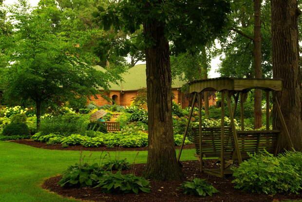 За какие деревья и кустарники на участке дачники могут получить штрафы