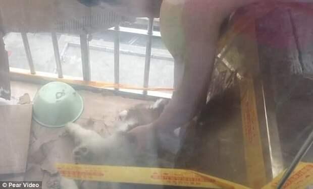 Китайцы всем миром спасли попавшего в беду щенка Счастливый конец, безвыходное положение, видео, всем миром, добрые люди, животные, собаки, спасение