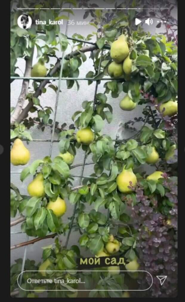 """Тина Кароль заставила пускать слюнки щедрым урожаем в своем саду: """"Ммм..."""""""