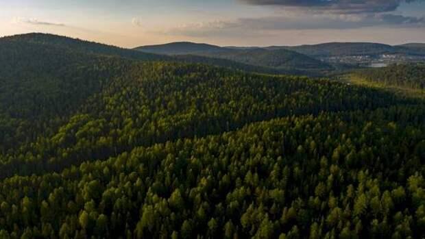 Авиалесоохрана зафиксировала в Свердловской области девять лесных пожаров