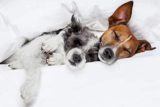 Ученые узнали, что снится кошкам и собакам