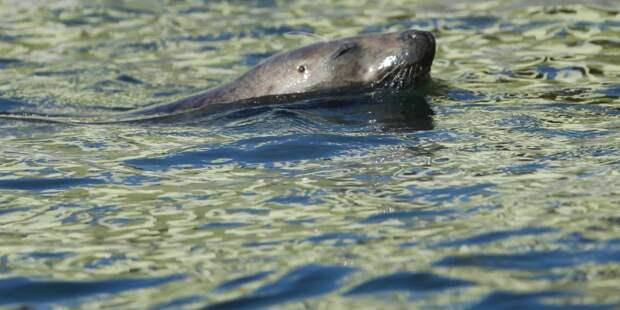 Флирт тюленя с равнодушной кошкой покорил Сеть