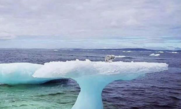 Рыбаки подплыли к льдине и обнаружили странное животное: посреди океана сидел песец