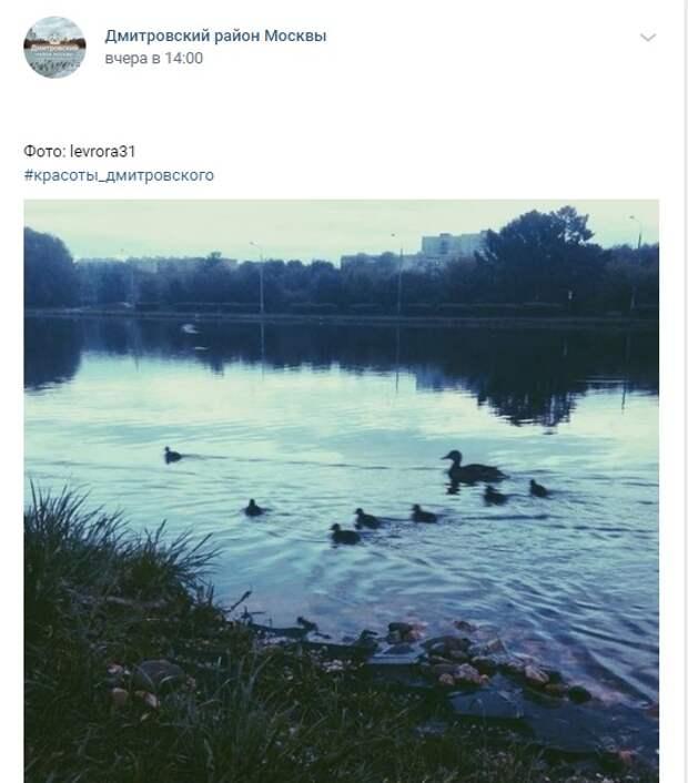 Фото дня: утята в парке на Ангарских